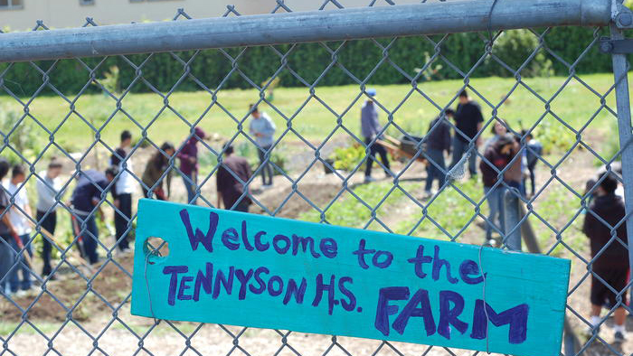 Tennyson High school farm